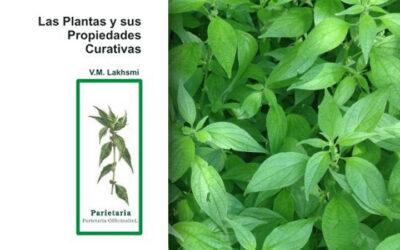 Las Plantas y sus Propiedades Curativas